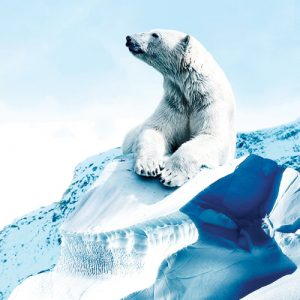 Wonder of the Arctic
