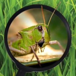 A Bug's World